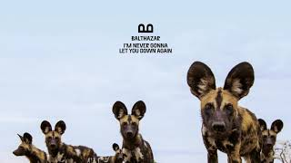 Balthazar   I'm Never Gonna Let You Down Again (Official Audio)