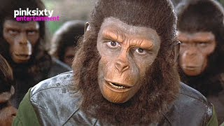 Planet of the Apes | Roddy McDowall - Pinksixty Entertainment