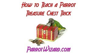How to Teach a Parrot the Birdie Treasure Chest Trick
