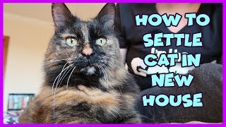 How To Help Your Cat Get Used To Their New Home | Tips To Settle a Cat In A New House