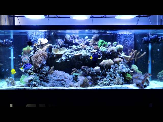 Reef Tank Maintenance and Water Changes