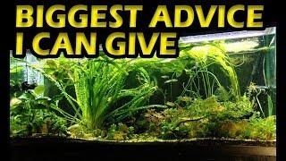 Planted Aquarium - The BIGGEST Advice I Can Give Your Aquarium