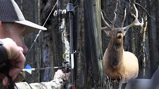 SCREAMING Bulls IN YOUR FACE! Bow Hunting Elk In The Backcountry With Grizzlies