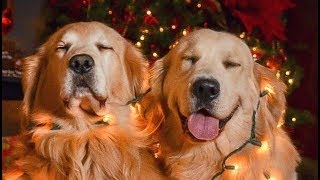 Сute and funny video about dogs.