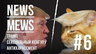 News Mews #6. Трамп, сексуальный кенгуру, антихарассмент
