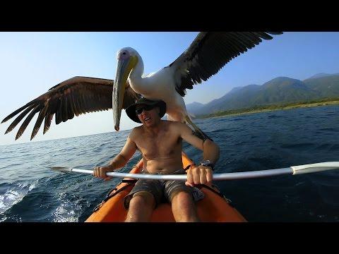 O homem que desenvolveu uma improvável amizade com um Pelicano