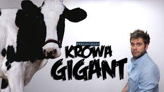 KROWA GIGANT | Poszukiwacz #373