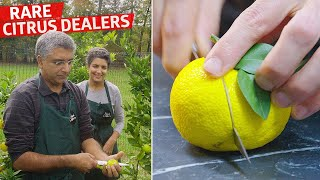 How a New Jersey Family Grows and Sells Yuzu to Michelin-Starred Restaurants — Vendors thumbnail