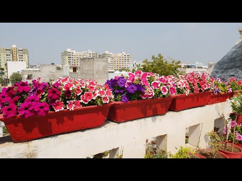 Today's Blooms in My Garden || Flowers in My Garden || Fun Gardening