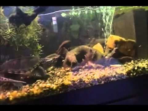 How to clean turtle tank yahoo answers for Cleaning fish tank with vinegar