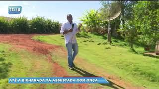 Onça misteriosa aterroriza moradores de área rural de Rolândia