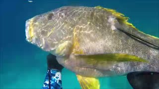 North QLD Spearfishing Vol 2