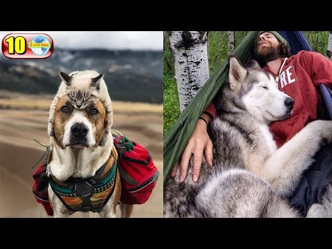 10 สุดยอดเรื่องราวประทับใจของเหล่าสุนัขเพื่อนรักนักผจญภัย