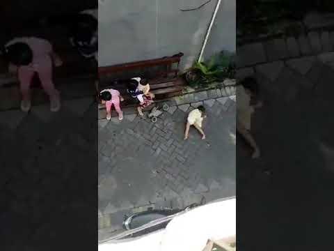 Criança é arrastada na rua por macaco
