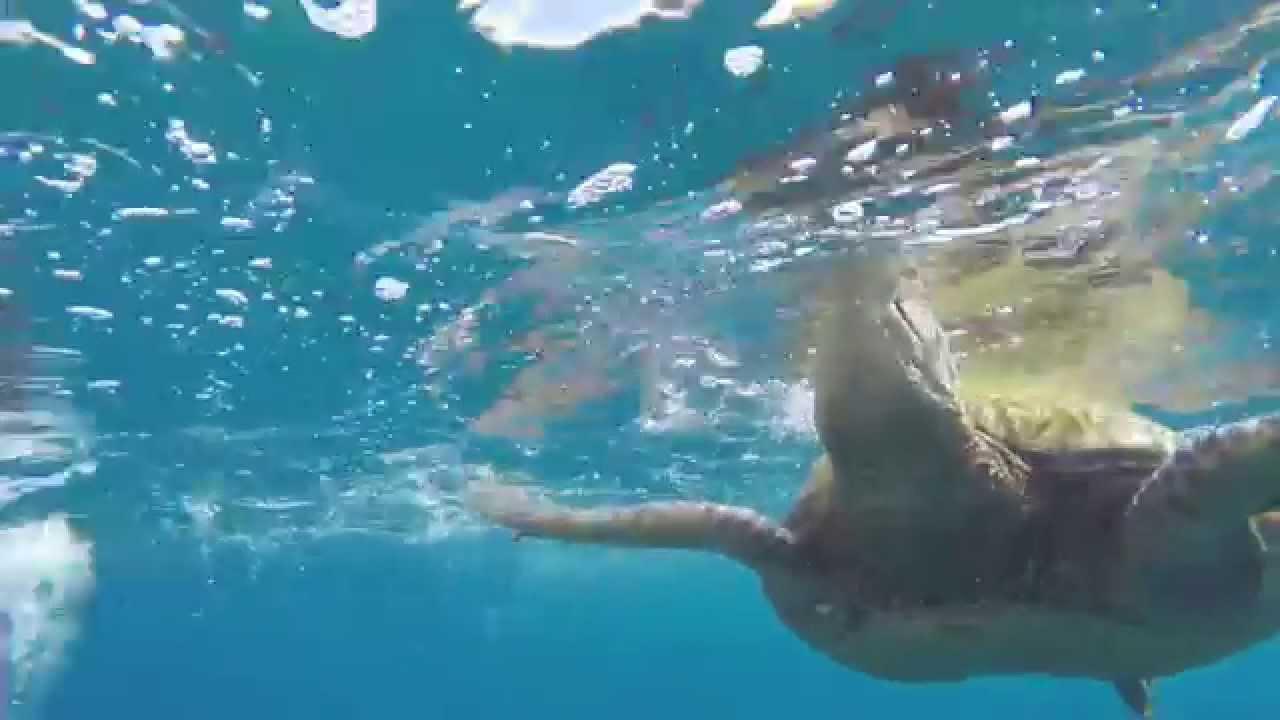 filmed for Marriott Kauai