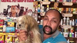 Pet Care | Breeding Business - Know About Lhasa Apso | Good Quality Puppy - Bhola Shola