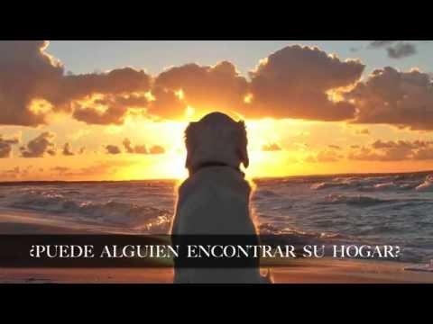 Sunshine Keane letra subtitulada al español
