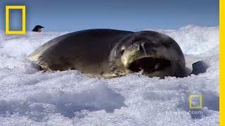 Antarctica | Exploring Oceans thumbnail