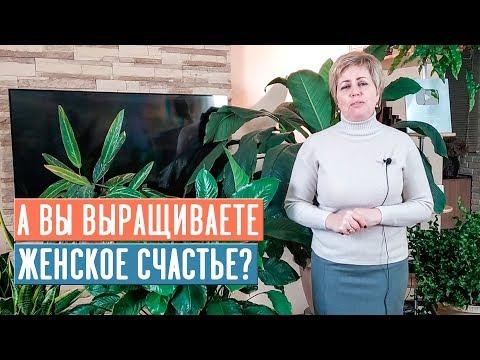 СПАТИФИЛЛУМ - ЖЕНСКОЕ СЧАСТЬЕ 🌟 Особенности выращивания / Садовый гид