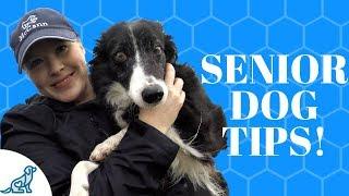 Senior Dog Care- Tips To Keep Them Healthy!