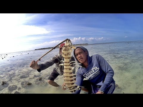 Fishing Mantis Shrimp - Bamboo traps catching giant mantis shrimp
