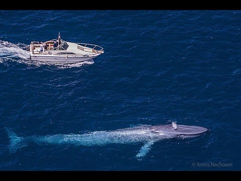 The Biggest Sea Creature : Blue Whale : Best Documentary 2017 Mp3