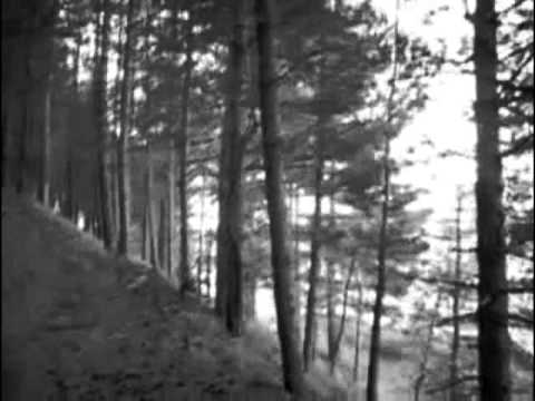 TURE'E  The Forest Of Dark Trees - 2012