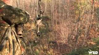 Hunting Whitetail with Bow in Ohio