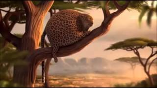 Fat leopard