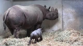 Kleines Nashorn Zoo Magdeburg