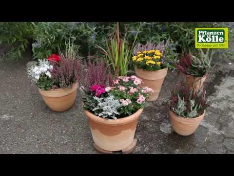 Blumenkübel Bepflanzung für den Herbst I Pflanzen-Kölle