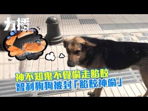 智利狗狗被封「餡餃神偷」