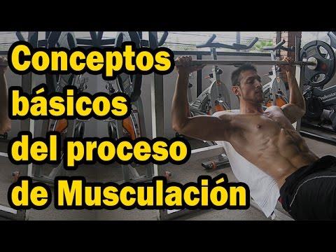 Conceptos básicos del proceso de musculación