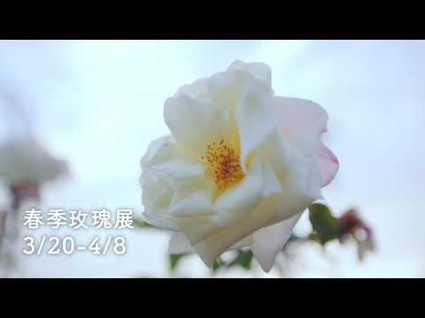 春天來了,台北「花開好了」