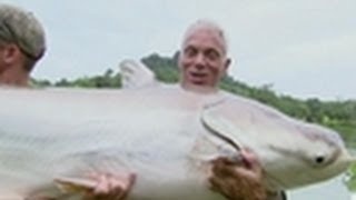 mekong giant catfish river monsters free online videos best movies
