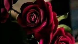 اماني السويسي خليك في بيتك Amani Swissi | Khalik Fi Beitak | Music Video