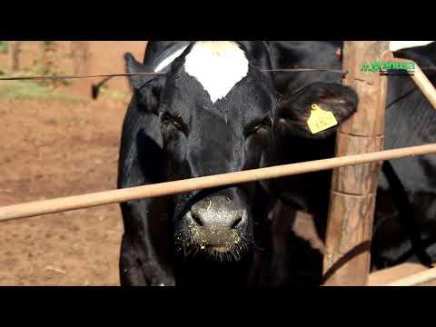 Qué debemos tener en cuenta en la nutrición animal