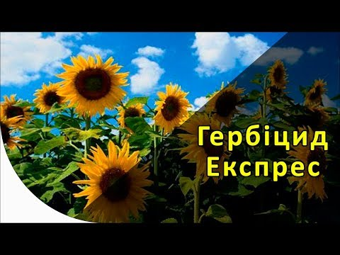Экспресс - гербицид на подсолнечник. Экспресс Сан