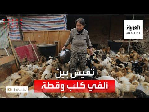 العرب اليوم - شاهد: سيدة صينية تعيش مع 2700 كلب وقط في بيتها!