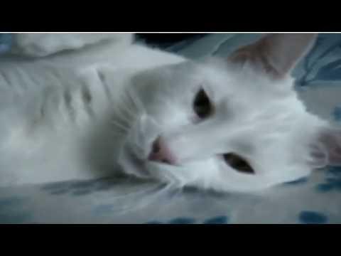 ឆ ម ច ន យ យ ហ យច ជ ទ ត funny cat