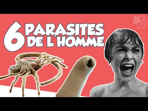 Quels parasites vivent dans lappartement de la photo