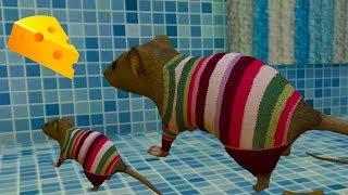 СИМУЛЯТОР Маленькой МЫШИ #3 РОДИЛСЯ МЫШОНОК у мышки Напала мышь с кошкой детский летсплей #ПУРУМЧАТА
