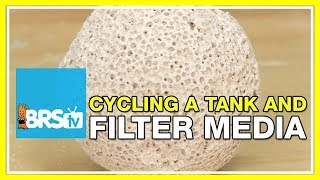 FAQ #39: Should filter media be used while cycling a reef tank?
