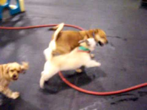 Terrific Thursday Morning – The calmer dogs – 12/3/09 Central Bark Doggy Day Care Oswego