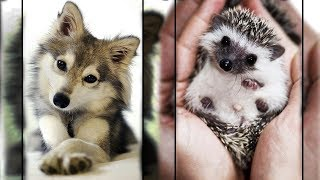 Cutest Animals In The World 😇1 - Super Cute Pets Bring Warmth 💗