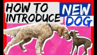 How to bring a new dog to your dog at home - Dog Training with Americas Canine Educator